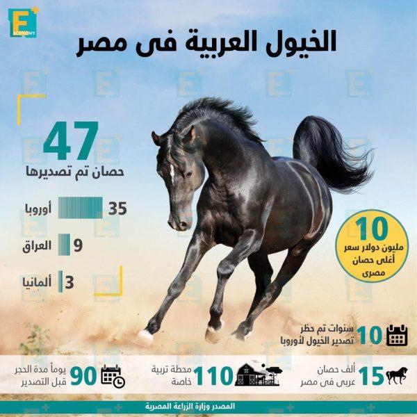 الخيول العربية في مصر