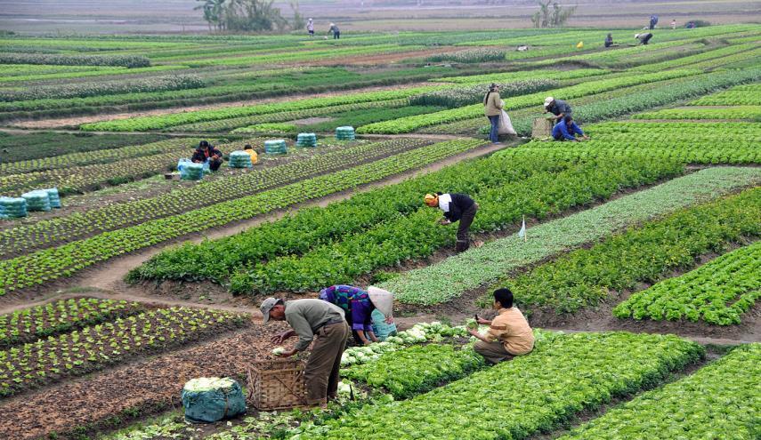 صغار المزارعين